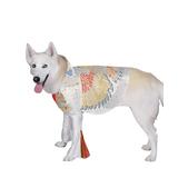 Costume d'Elvis pour chien